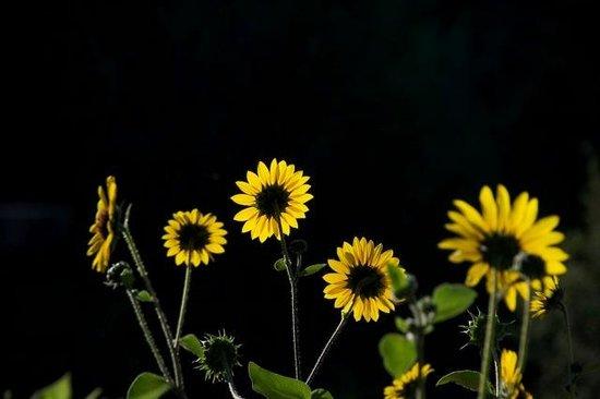Mountain River Inn Bed & Breakfast: Sun Flowers-GL