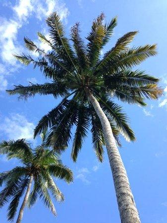 Qamea Resort And Spa Fiji: Palms on the beach