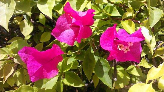 Valentin Imperial Maya: Stunning Flowers everywhere