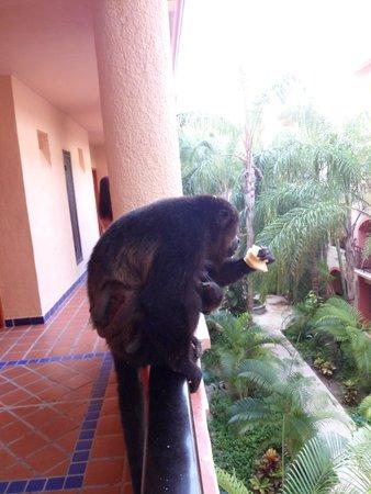 Sandos Playacar Beach Resort : Monkey
