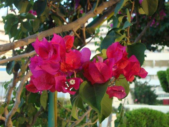 Hilton Hurghada Plaza: flowers