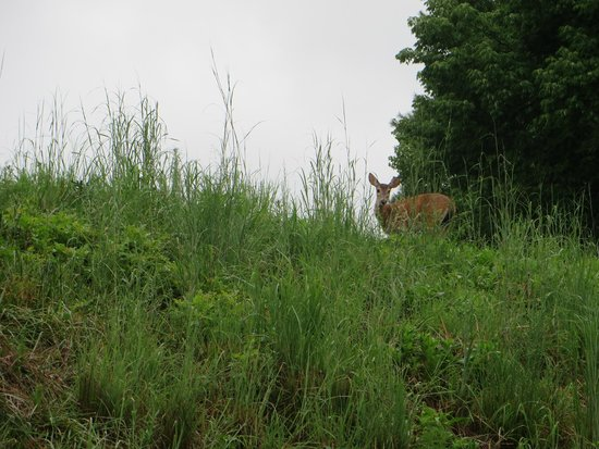 Legacy Lodge: Saw a deer on the grounds
