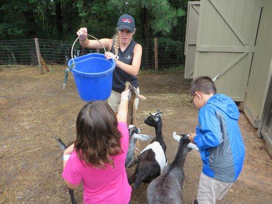 Legacy Lodge: Petting zoo