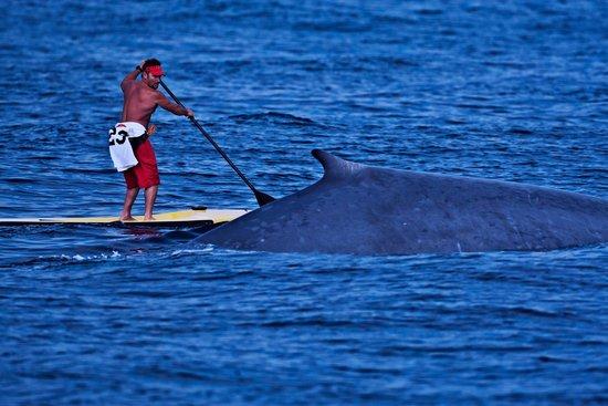 PV Sea Dive: Paddle boarding in Los Muertos Bay