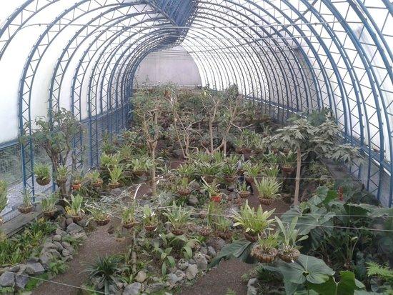 Encima de la cascada picture of jardin botanico de for Cascadas de jardin