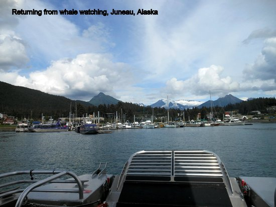 Juneau Whale Watch: Coming back from whale watching