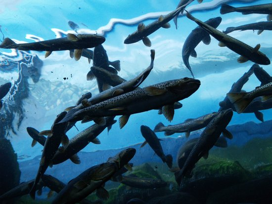 Loch Lomond Sea Life Aquarium: Shoal of fish