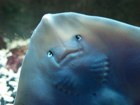 Loch Lomond Sea Life Aquarium: Hullo!