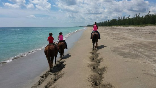 Image result for horseback riding on the beach fort pierce
