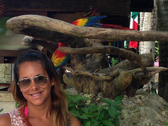 Sandos Playacar Beach Resort : Con los loros del sandos caraco