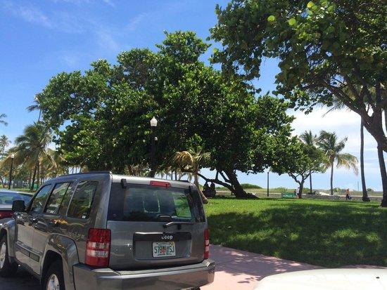 Miami Beach Boardwalk: Vista do jardim