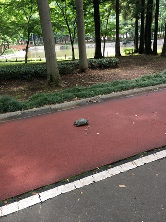 A turtle walking at Doho park