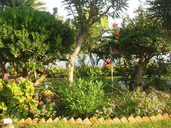 Crystal Springs Beach Hotel: территория отеля