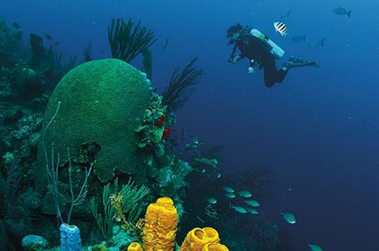 Belice: Bucket list worthy scuba diving