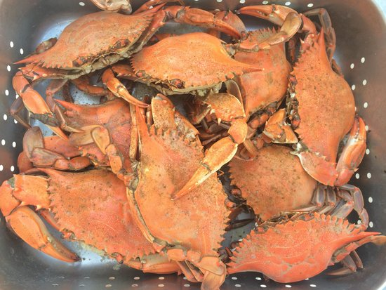 Calabash, NC: Oh yes!  Steamed blue crabs!!