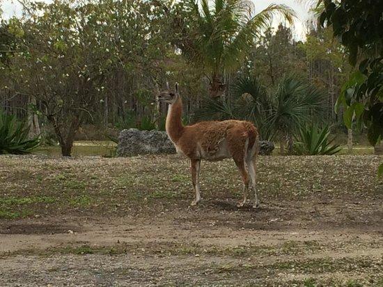 Zoo Miami: Amazing when reach near by