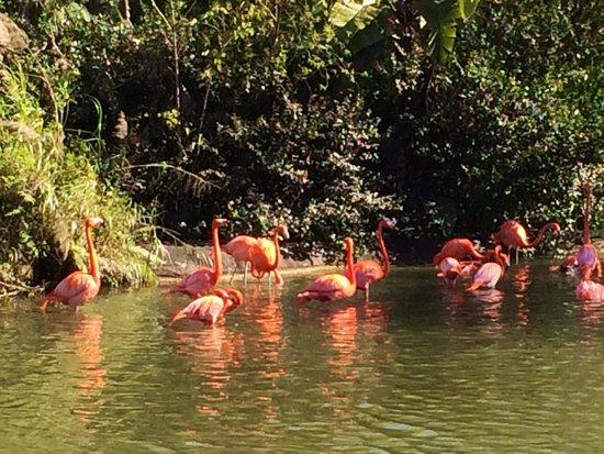 Zoo Miami : I love their color so nice