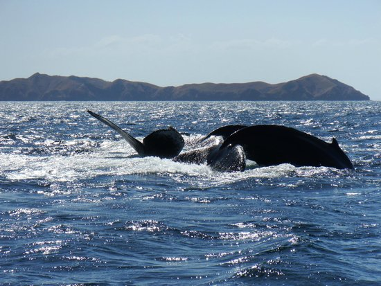 Papagayo Gulf Sport Fishing - North Pacific Tours: Whale Tails