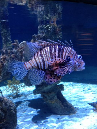North Carolina Aquarium at Pine Knoll Shores : Coolest looking fish in the place.