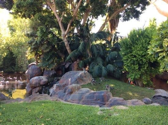 Bioparc Fuengirola: l' oasis