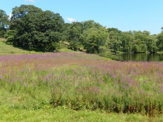 Meadow next to North Bridge 8/8/2014