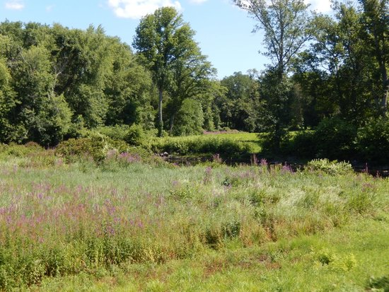 Meadow by the Concord River at North Bridge 8/8/2014
