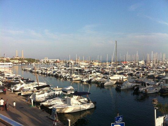 Club MAC Alcudia: Trip to the port worth a visit :)