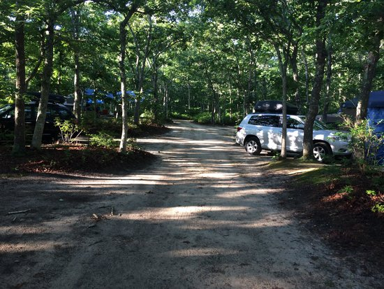 Martha's Vineyard Family Campground: In front of our site.