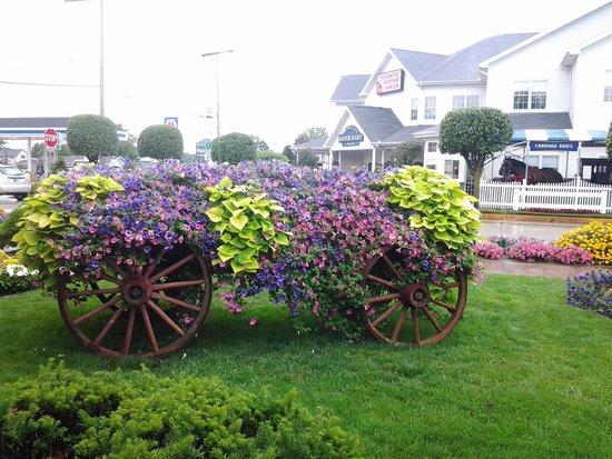 Blue Gate Garden Inn - Shipshewana Hotel: Shipshewana flowers