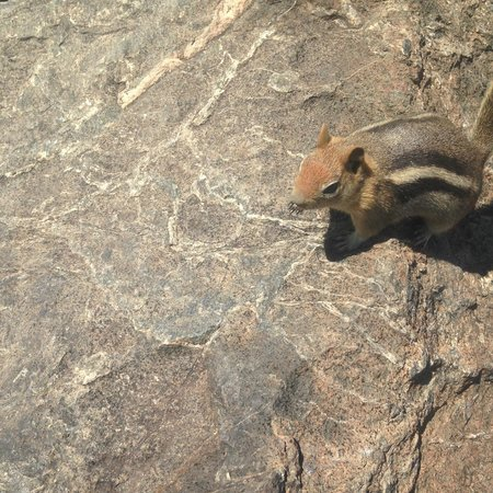 Mt. Tallac Trail: Friendly squirrel at the Mt. Tallac summit