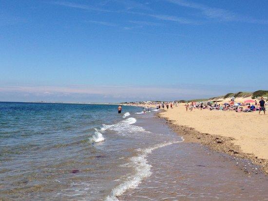 Herring Cove Beach: Wonderful beach walk