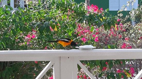 Chogogo Resort: een schoteltje met suiker trekt mooie vogels aan