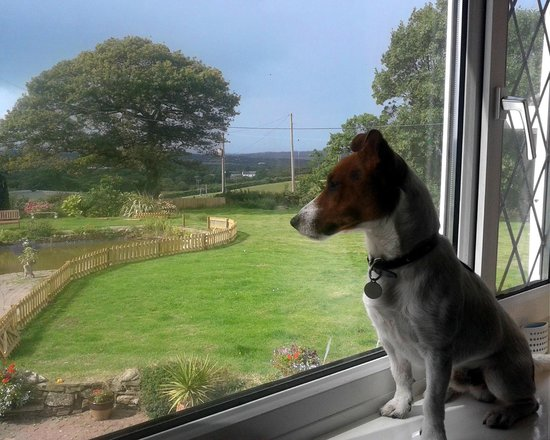 Brynawel Farm: Cosmo enjoying the view