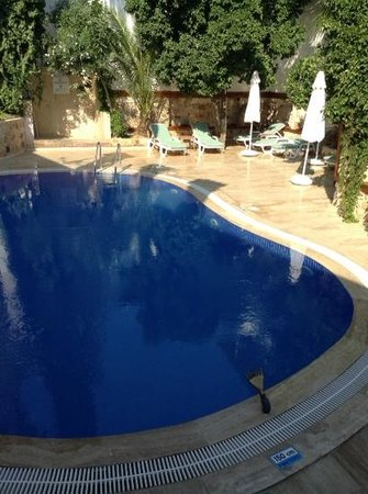 White Garden Pansion: la zona piscina