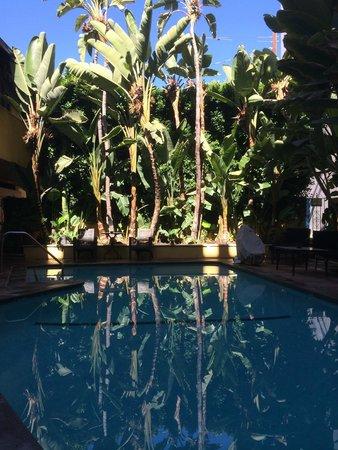 Mosaic Hotel Beverly Hills: la piscine