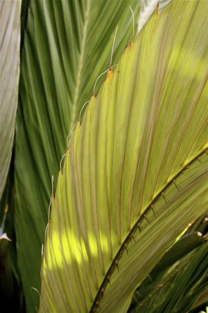 Denver Botanic Gardens : palms in the tropical rain forest