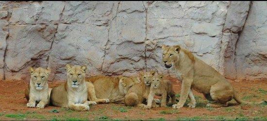 Jardin Zoologique National de Rabat : The family