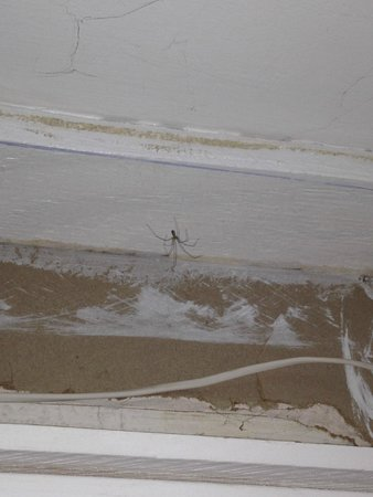 Lodge at Kennebunk Motor Inn: Spider in closet