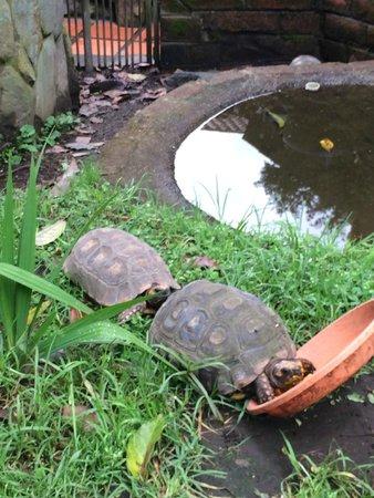 Jardines de Chamana: tortugas on site!