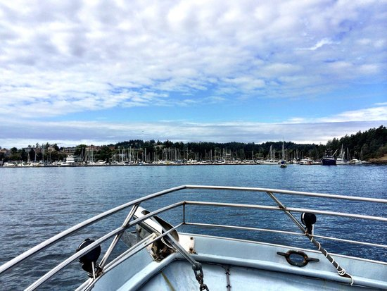 Puget Sound Express - Day Trips: Approaching Friday Harbor