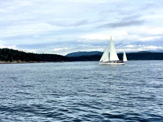 Puget Sound Express - Day Trips : Glassy Conditions- Gorgeous