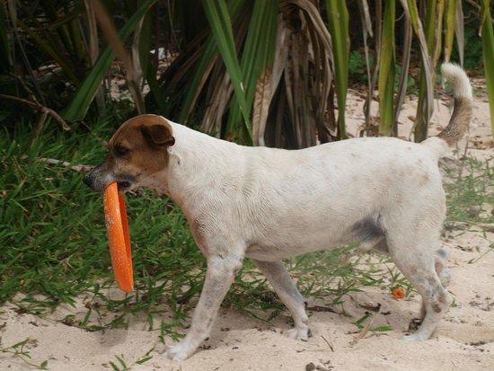 Blue Lagoon Beach Resort: Charlie, stealing our Frisbee again
