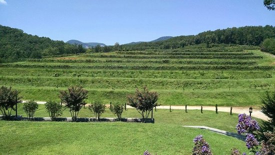 Cleveland, SC: The vineyard and Table Rock beyond.