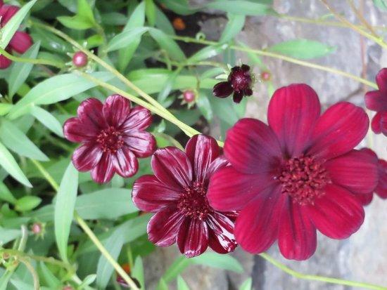 Butchart Gardens: Beauty in bloom