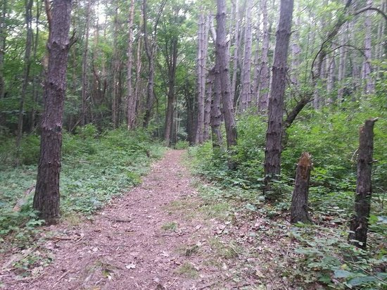 Evergreen Trails Campground: Raccoon Run