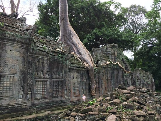 Preah Khan: How did this tree grow here?