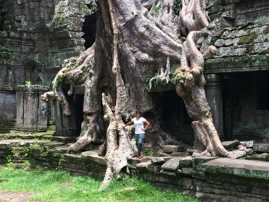 Preah Khan: Other side of the tree.