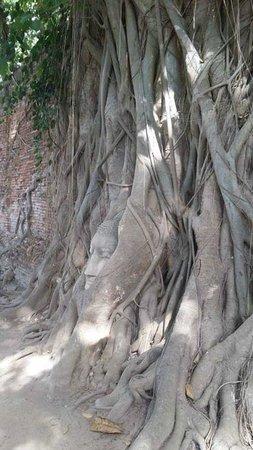 Wat Mahathat : 樹中頭側面