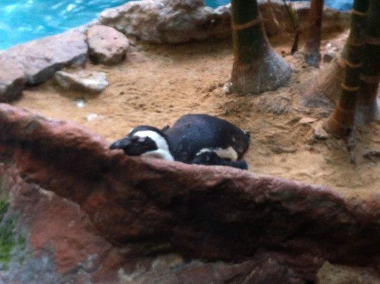 Dallas World Aquarium: Penguin resting