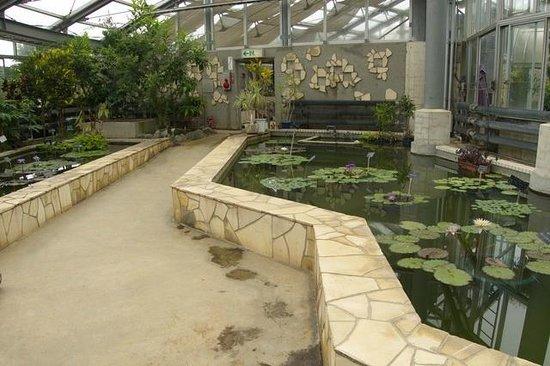 Kanagawa Prefectural Ofuna Botanical Garden : 温室の中